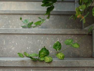 מדרגות אבן מונטנה גרין